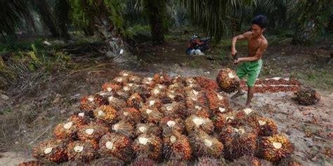 Minyak Kelapa Per Liter Tahun harga minyak sawit masih dalam tren melejit baca koran pagi