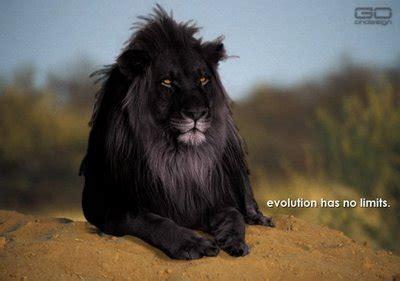 imagenes leon negro junio 2012 el rinc 243 n de mayriel