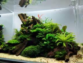 Driftwood Aquascape Pogostemon Helferi Downoi Flowgrow Aquatic Plant Database