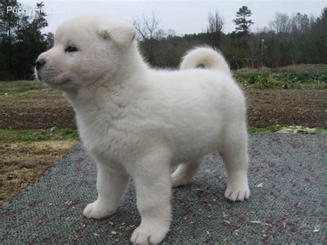 free puppies in wisconsin dogs wisconsin free classified ads