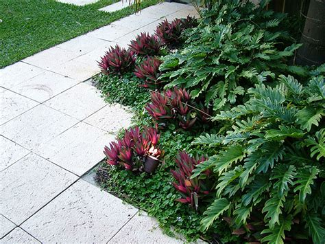 nedlands tropical garden cultivart landscape design