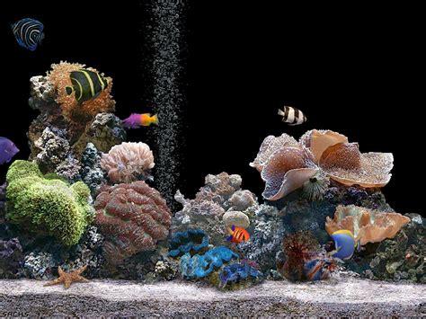 desktop background fond d 233 cran gratuit aquarium qui bouge fond d ecran 3d qui bouge gratuit 28 images 23 fond