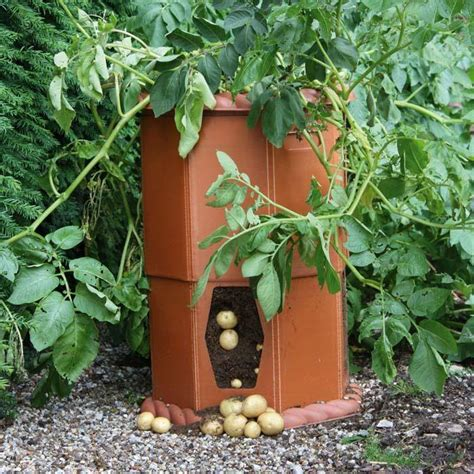 container gardening sweet potatoes container gardening container vegetable growing