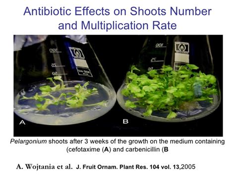 j fruit ornam plant res bacterial contaminants of plant tissue culture