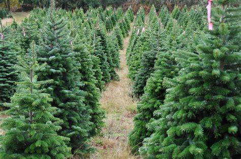 ag news christmas tree farms