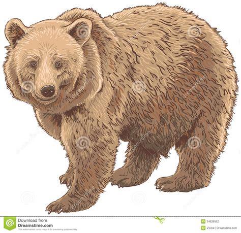 kodiak bear stock photography image 34626952