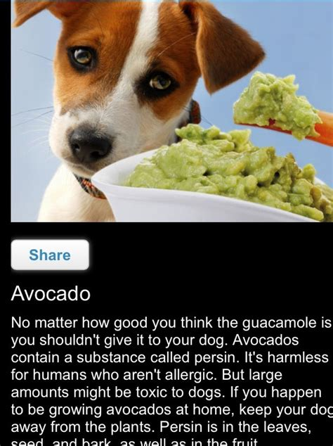 is avocado bad for dogs foods your should never eat trusper