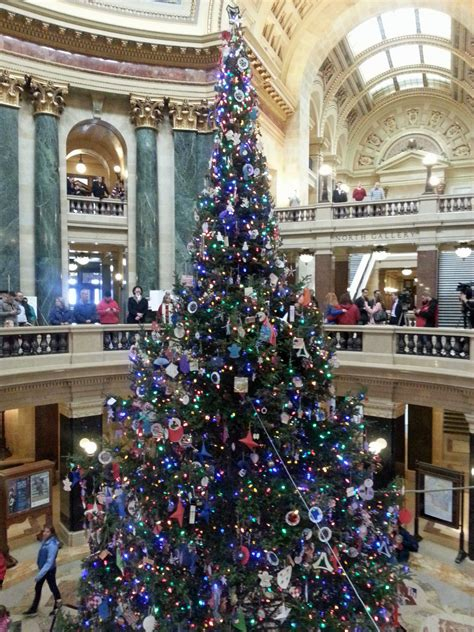 wisconsin capitol christmas tree to come from rhinelander