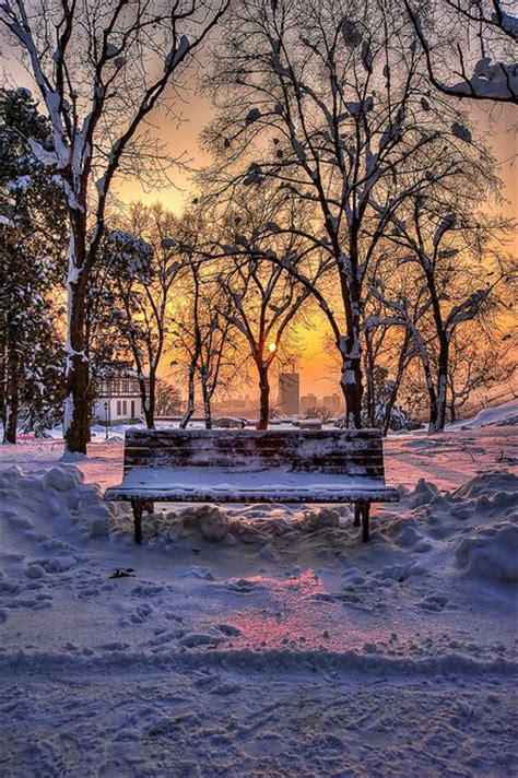bench srbija bench in a park in winter picturesque winter sunset