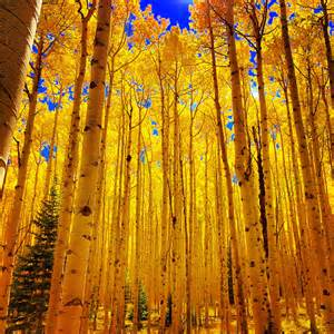 In Fall fall in aspen i imgur com