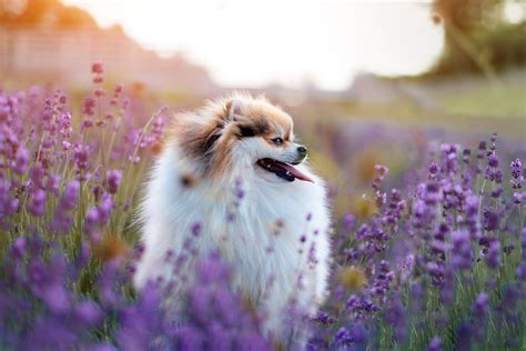 how are dogs for 45 gorgeous flower names for dogs that go beyond and rover