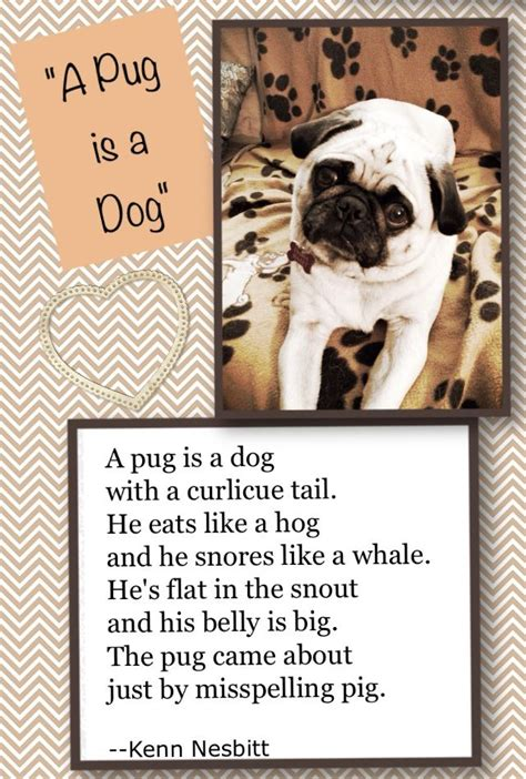 pug poems 17 best images about random on happy birthday pug onesie cupcakes and poem