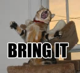 Bring It On Meme - bring it cat macros