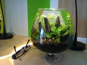 3 liter nano tank aquascaping aquascaping