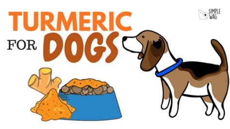 is turmeric for dogs turmeric for dogs the ultimate sheet simplewag