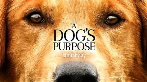 trailer for a s purpose the official trailer for a s purpose asks what s the meaning of