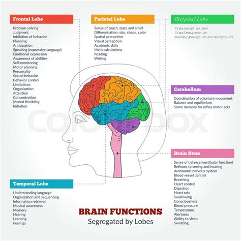 memory your brain the complete guide on how to improve your memory think faster concentrate more and remember everything books guide to the human brain anatomy and human brain functions