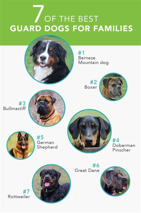 best dogs for families 7 of the best guard dogs for families care community