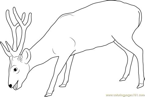 pokemon coloring pages deer deer pokemon coloring pages images pokemon images