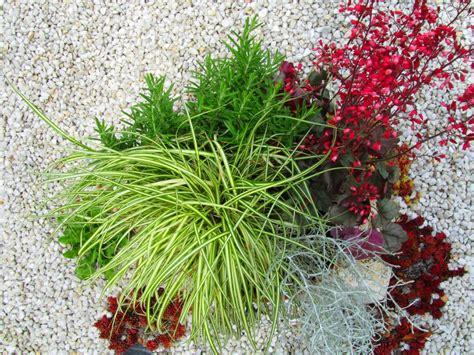 pflanzen versand schale bepflanzt 38 cm pflanzen versand f 252 r die besten