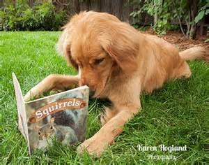 golden retriever puppy cards best 25 golden ideas on