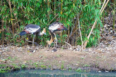 austin roberts memorial bird sanctuary inligting