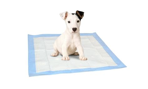 puppy pads akc puppy pads groupon goods