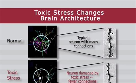 Psychological Effects Of Color toxic stress