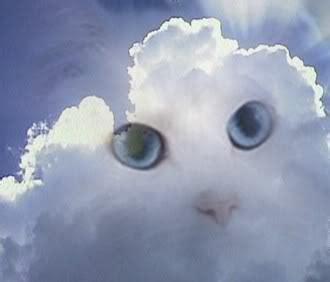 day  cat dies  natural
