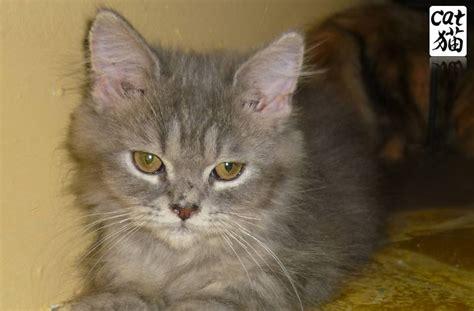 Suplemen Untuk Kucing kucing utara botol untuk kucing