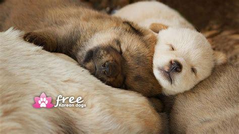korean dogs free korean dogs help us end the korean trade