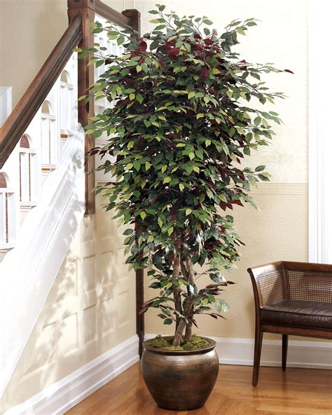 decorative trees for the home 5 5 capensia silk bush tree at officescapesdirect