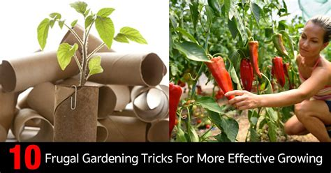 frugal gardening tricks   effective growing