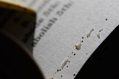 Tiny White Bugs In Bed by Are There Bedbugs In Your Library Books Here S How To