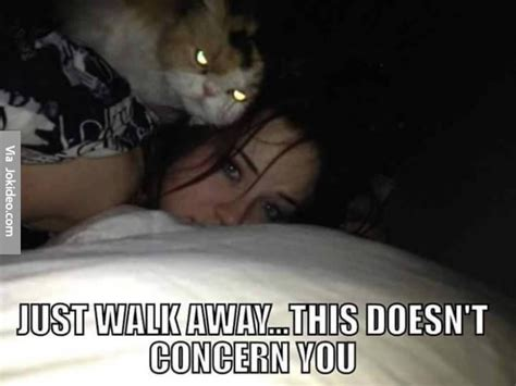 Funny Scary Memes - funny scary cat meme jokes memes pictures