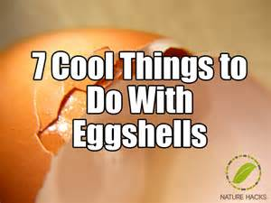 Cool things to do with egg shells