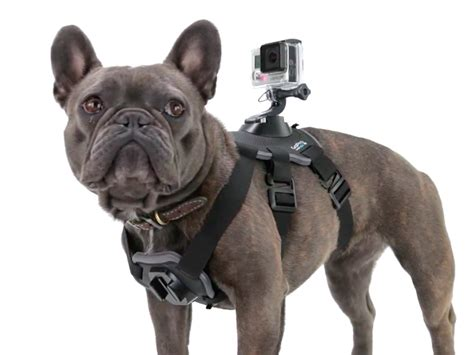 go pro on gopro fetch records s point of view business insider