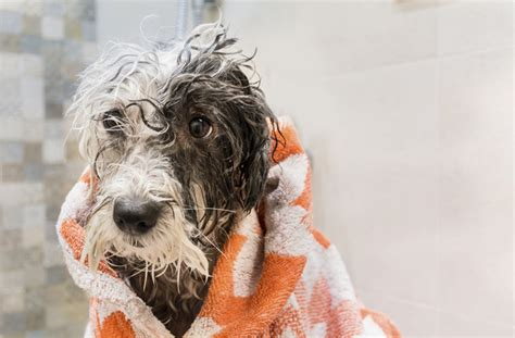 5 things you should do dog grooming 5 things you should never do pawculture