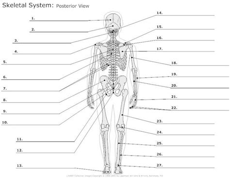 anatomy and physiology coloring workbook answers page 84 25 best ideas about skeleton labeled on