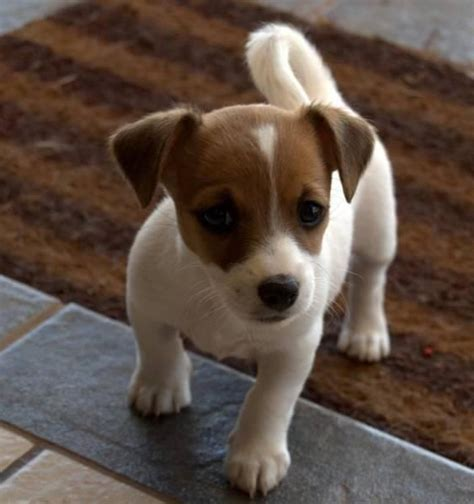best small breed dogs best 25 small breeds ideas on small puppy breeds cutest small dogs