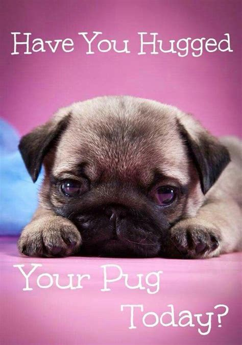best pug names 25 best ideas about pug names on pugs pug puppies and pugs