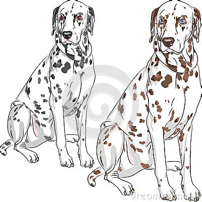 second set of for puppies vector set dalmatian breed sitting stock images image 29441974