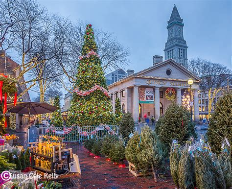 forest at quincy market susan cole photography