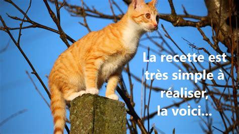 Repulsif Pour Chat Jardin by Tr 232 S Efficace R 233 Pulsif Chats Naturel 233 Cologique Avec