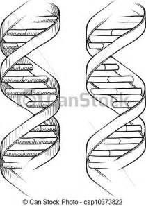 adn dibujo ilustraciones de vectores de doble bosquejo adn h 233 lice