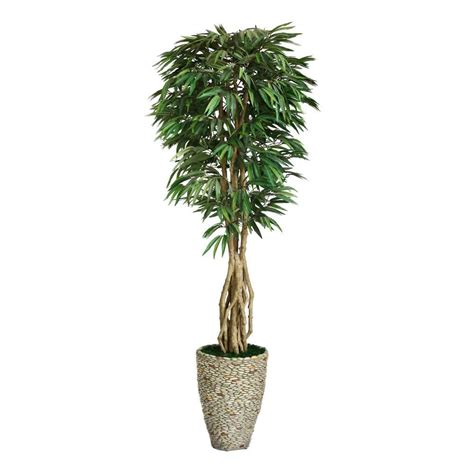 Home Depot Kitchen Design Fee laura ashley 92 in tall willow ficus with multiple trunks