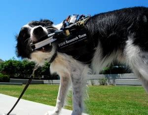 fido facilitating interactions for dogs with occupations