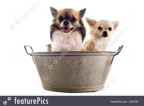 two dogs in a bathtub pets dogs in the bath stock image i3276700 at featurepics