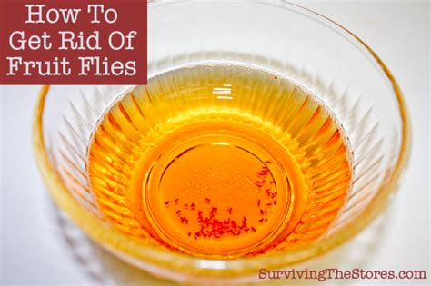 best way to get rid of flies in backyard how to get rid of fruit flies with apple cider vinegar and
