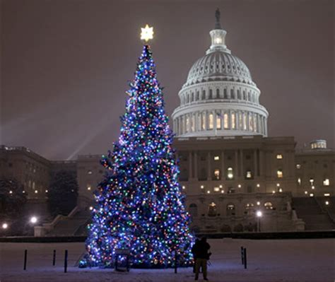 christmas trees in america halloween holidays wizard